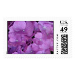 Purple Hydrangea Postage Stamps