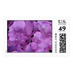 Purple Hydrangea Stamp