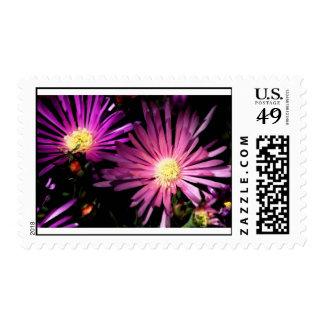 Purple Ice Plant #2 Postage Stamp
