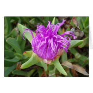 Purple Ice Plant Flower Greeting Cards