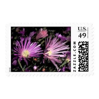 Purple Ice Plant Stamps