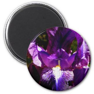 Purple Iris 2 Inch Round Magnet