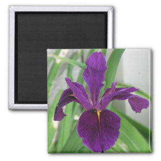 Purple Iris 2 Inch Square Magnet