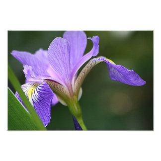 Purple Iris 2 Photo Print