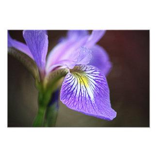 Purple Iris 5 Photo Print