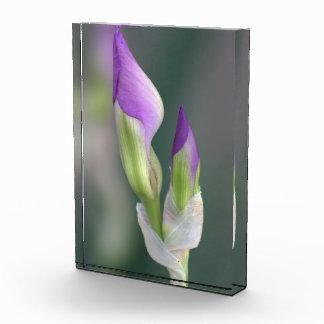 Purple Iris Bud Acrylic Award