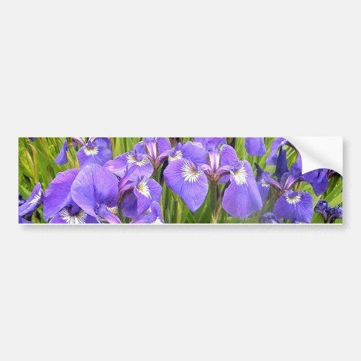 Purple Iris Bumper Sticker
