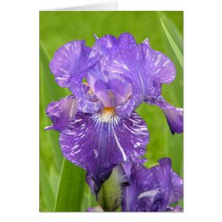 Purple Iris Stationery Note Card