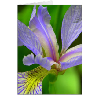 Purple Iris Card