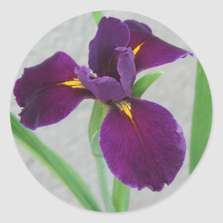 Purple Iris Classic Round Sticker