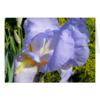 Purple Iris CricketDiane Art & Photography Card