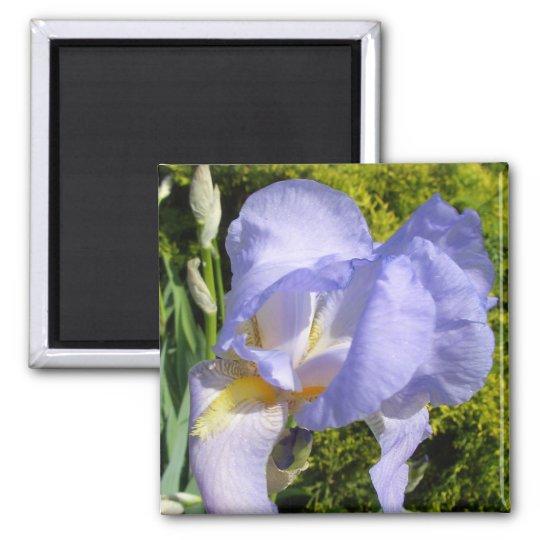 Purple Iris CricketDiane Art & Photography Magnet