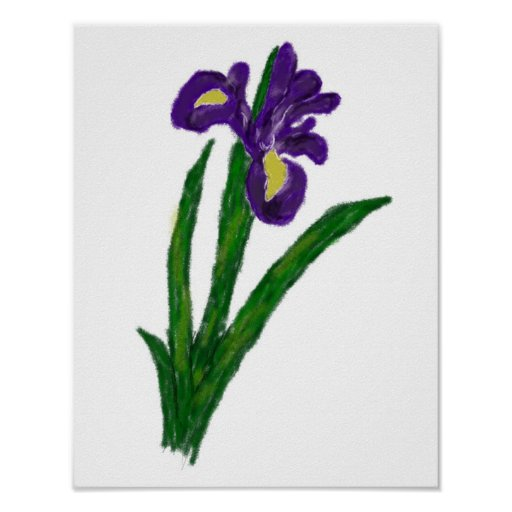 Purple Iris Drawing Print