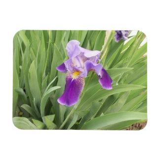 Purple Iris Flexible Magnet