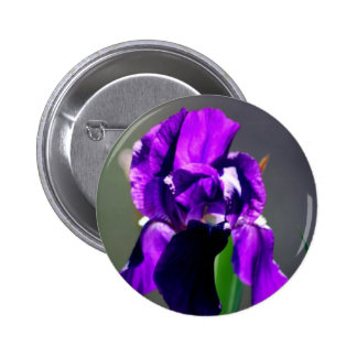Purple iris flower and its meaning pinback button