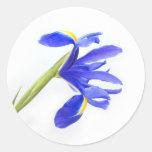 Purple Iris Flower Classic Round Sticker