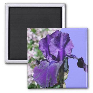 Purple Iris Flower Photo Magnet