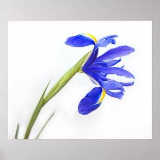 Purple Iris Flower Print print