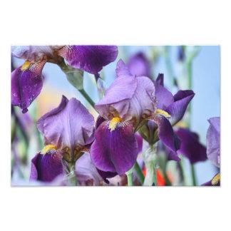 Purple Iris Flowers Photo Art
