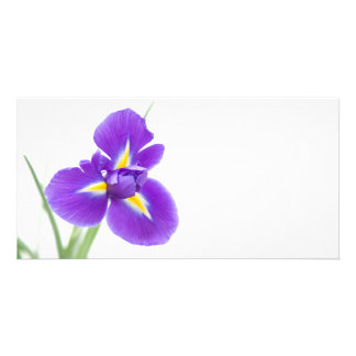 purple iris flowers, space for text card