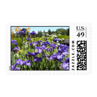Purple Iris Garden, Elizabeth Park Postage Stamps