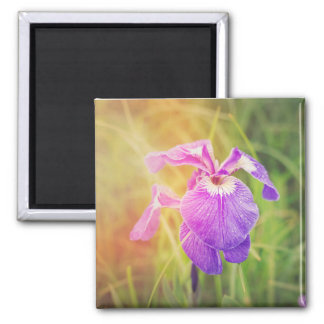 Purple Iris in Sunshine Magnet