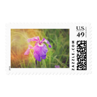 Purple Iris in Sunshine Postage