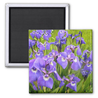 Purple Iris Fridge Magnets