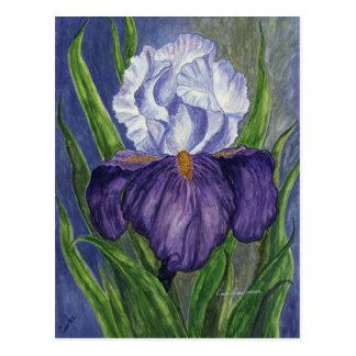 Purple Iris  Mini Collectible Prints Postcard