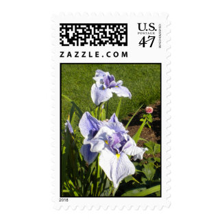 Purple Iris Postage