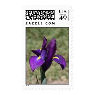 Purple Iris Postage Stamp