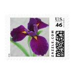 Purple Iris Postage Stamps