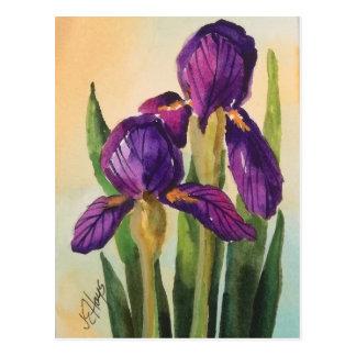 Purple Iris Postcard