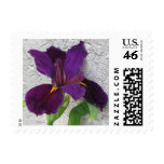Purple Iris Stamp