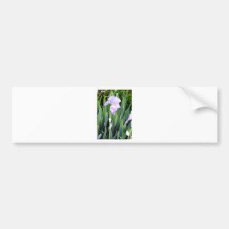 purple iris with the moring dew bumper sticker