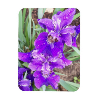Purple Iris with Water Droplets Flexible Magnet