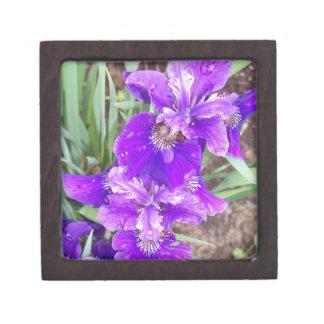 Purple Iris with Water Droplets Premium Gift Box