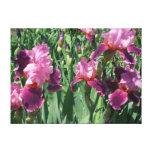 Purple Irises Beautiful Garden Flowers Canvas Print