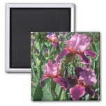 Purple Irises Beautiful Garden Flowers Magnet
