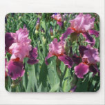 Purple Irises Beautiful Garden Flowers Mouse Pad