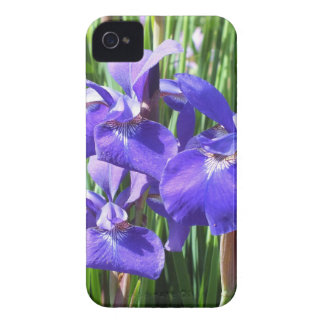 Purple Irises Blackberry Bold Case