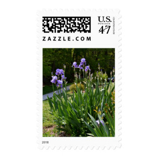 Purple Irises in a Gainesville Park Postage