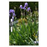 Purple Irises in Gainesville Park Dry-Erase Boards