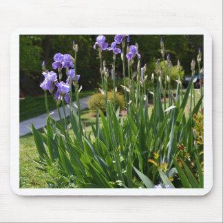Purple Irises in Gainesville Park Mouse Pad