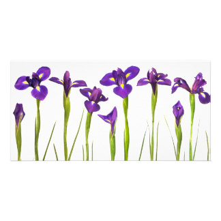 Purple Irises - Iris Flower Customized Template