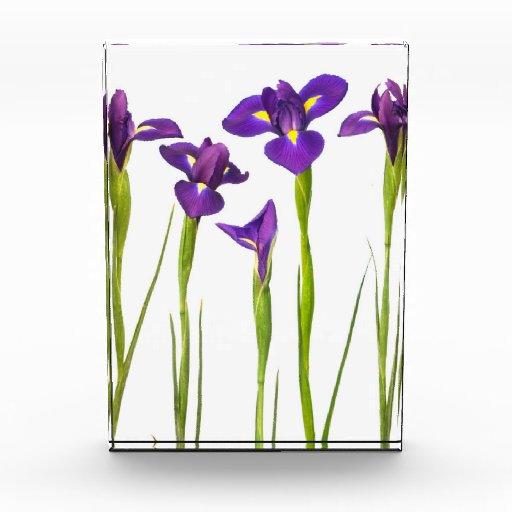 Purple Irises - Iris Flower Customized Template Award