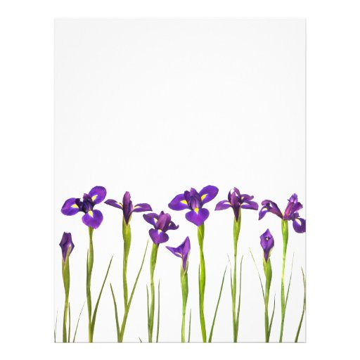 Purple Irises - Iris Flower Customized Template Flyer