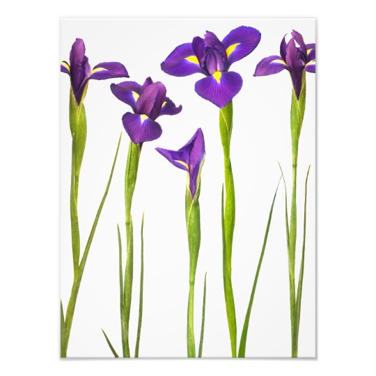 Purple Irises - Iris Flower Customized Template Photo Print