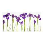 Purple Irises - Iris Flower Customized Template Photo Card