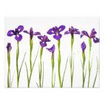 Purple Irises - Iris Flower Customized Template Photo
